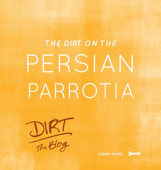Illustrated words Persian Parottia with Dirt the Blog logo