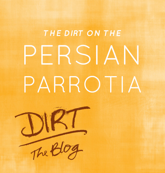 Illustrated words Persian Parottia with Dirt the Blog logo