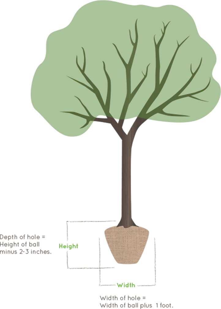 Illustration of a tree planter