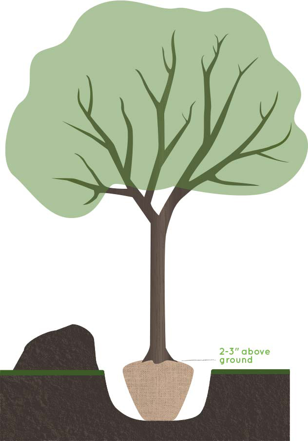 Illustration of a tree being planted