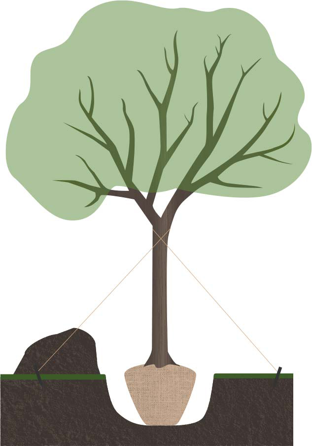 Illustration of a tree in a hole