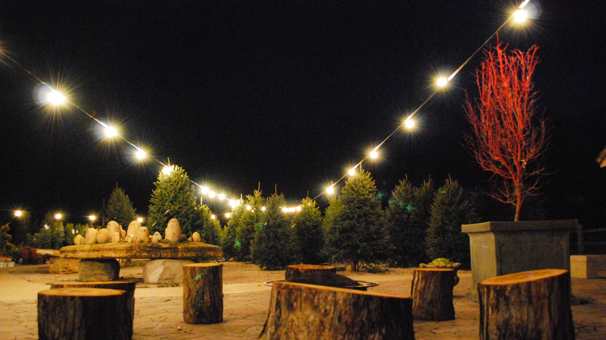 St. Louis Missouri Live Christmas Trees