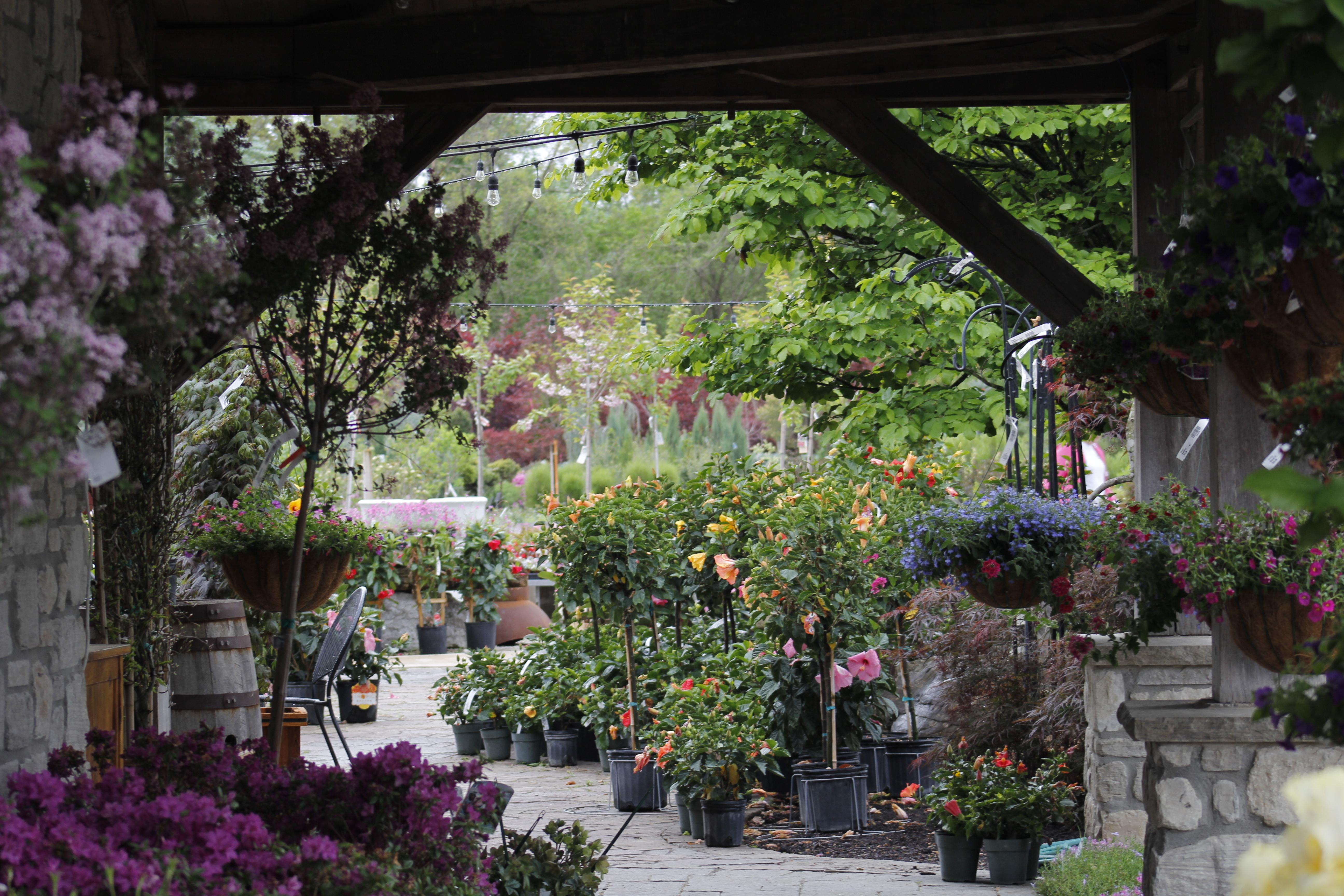 Frisella Nursery