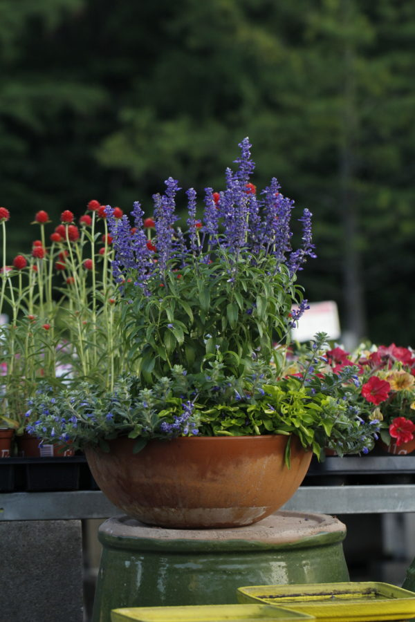 Fourth of July at Frisella Nursery