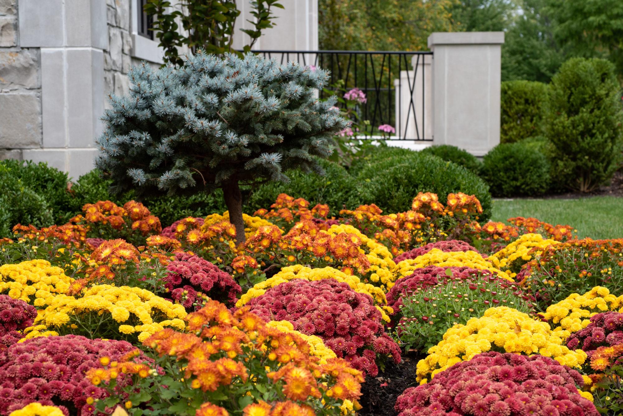 St. Louis seasonal landscaping