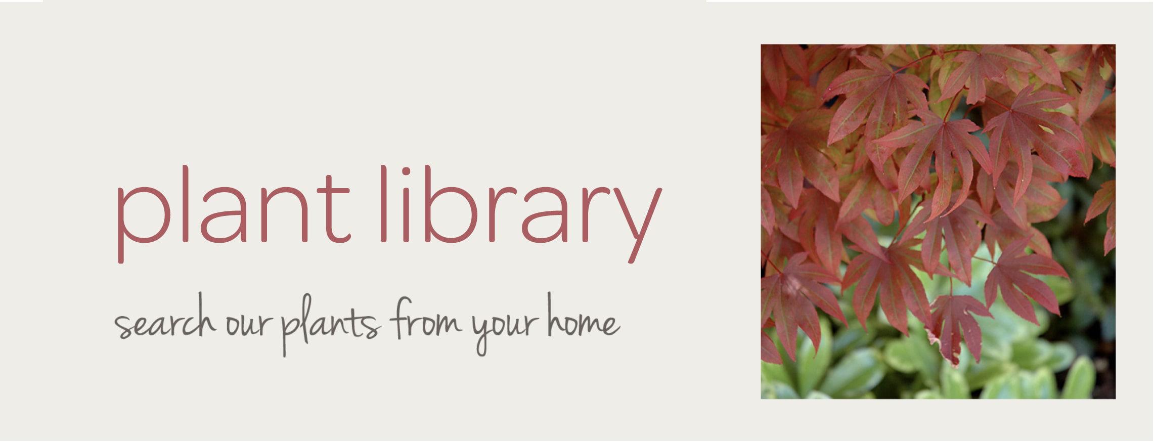 Frisella Nursery plant library tool