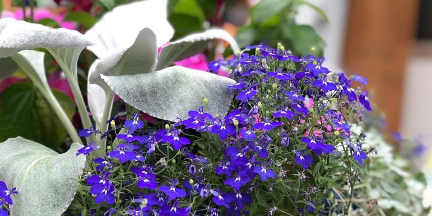 Frisella Nursery gallery photo 8