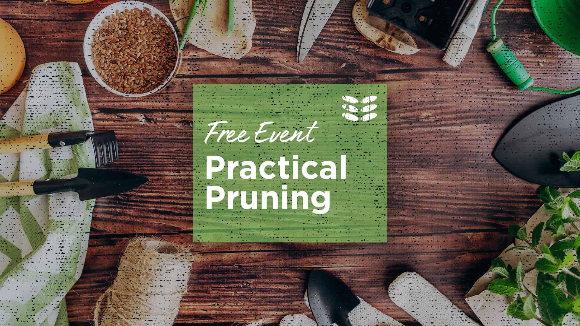 Practical Pruning Nov 7th