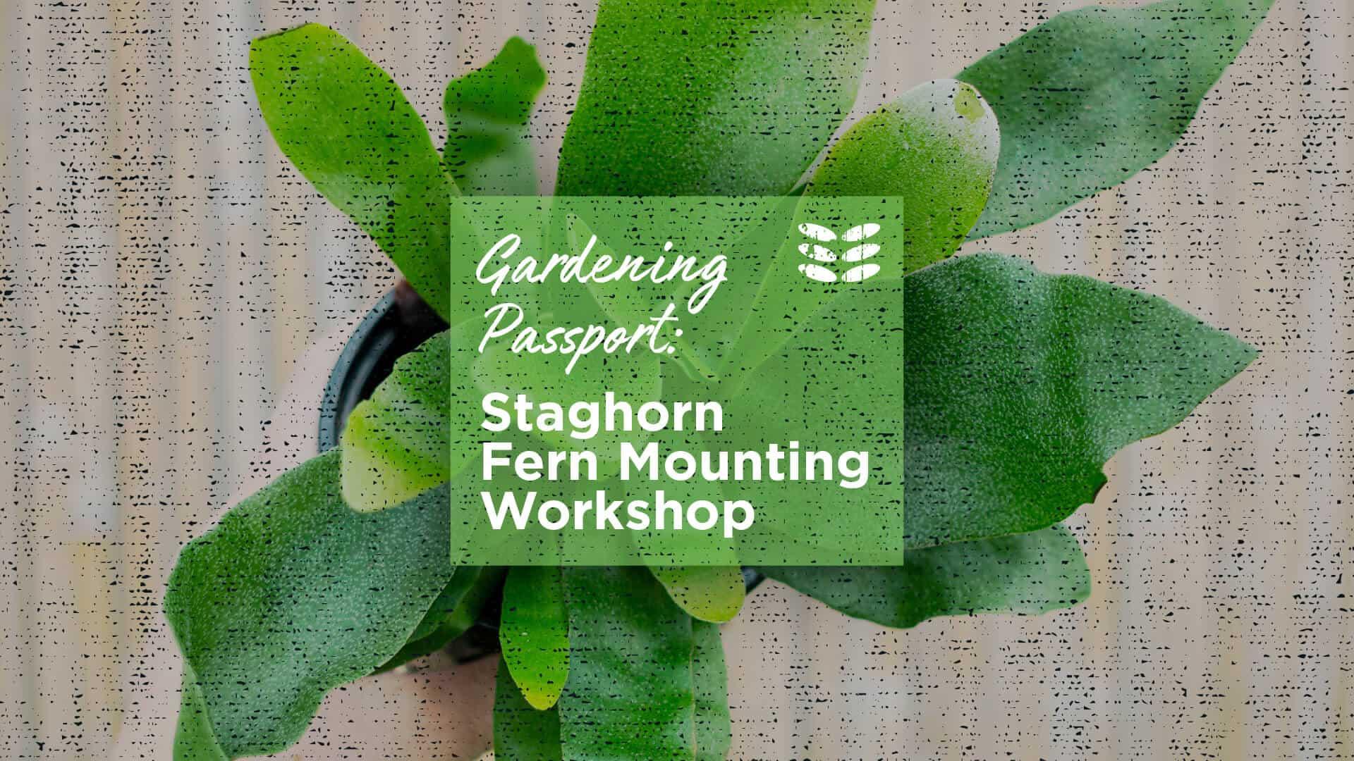 Staghorn Fern Mounting Workshop Sept 19th