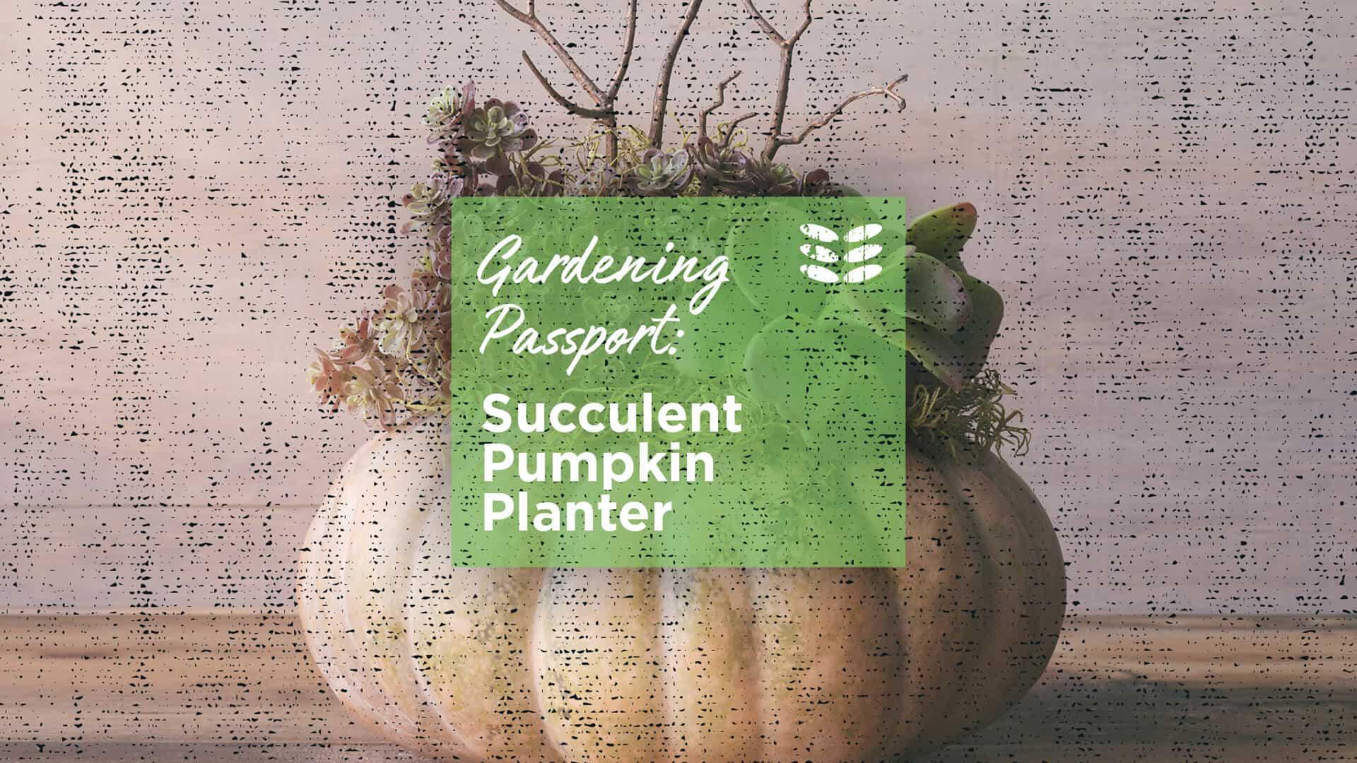 Succulent Pumpkin Planter October 10th